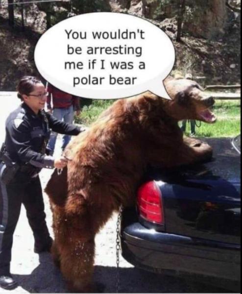 joke bear.png